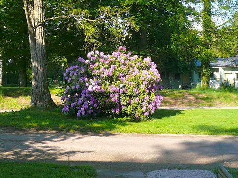 Camping Parc Du Chateau - Camping Vosges - Image N°7