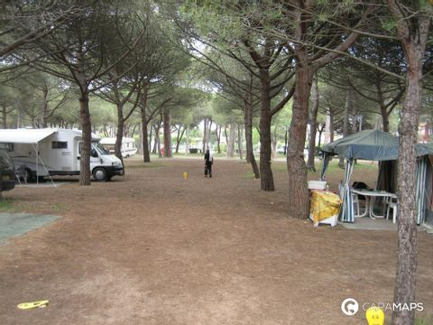 Camping aire naturelle La Palmeraie - Camping Herault