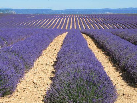 Alpes-de-Haute-Provence  Domaine Naturiste Petit Arlane - Camping Alpes-de-Haute-Provence - Afbeelding N°14