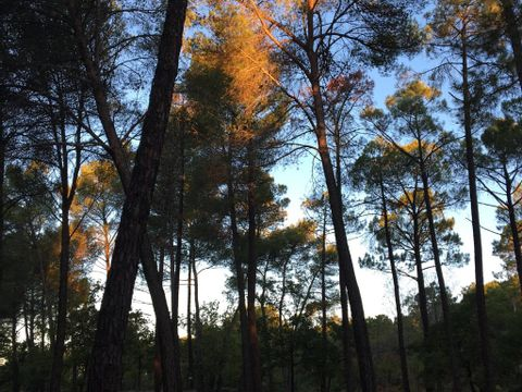 Camping Arc En Ciel - Camping Vaucluse - Image N°8