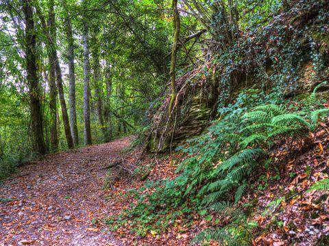 Camping La Bastide d'Albignac - Camping Tarn - Image N°10