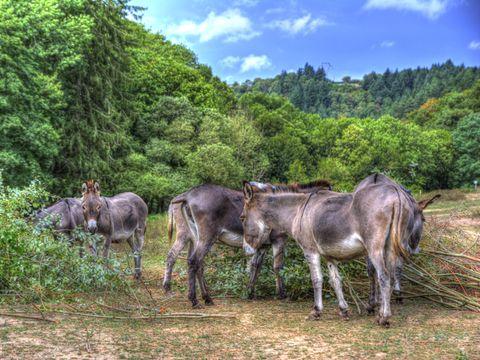 Camping La Bastide d'Albignac - Camping Tarn - Image N°7