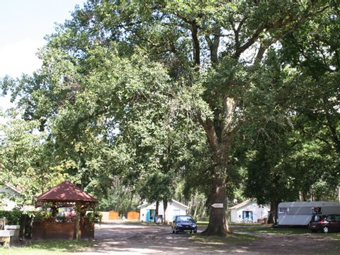 Camping aire naturelle de Perroy - Camping Landes - Image N°2