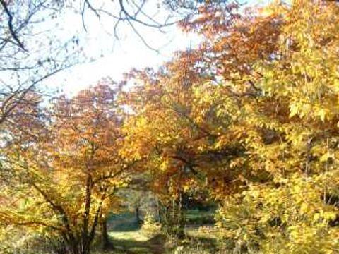 Aire Naturelle de Camping Les Cerisiers - Camping Loire - Image N°2