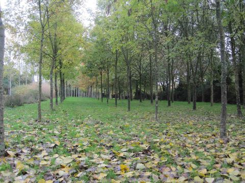 Camping aire naturelle de Charrier Robert - Camping Vendée - Image N°2