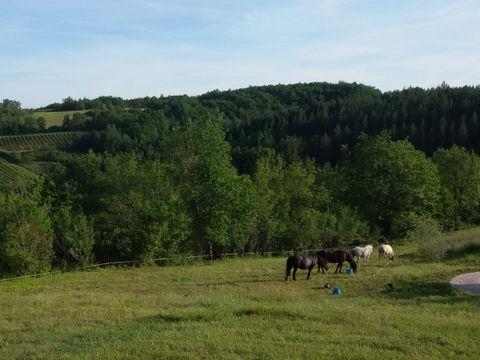 Camping Les Hauts d'Albas - Camping Lot - Image N°6