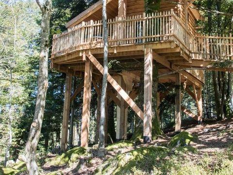 cabanes de belfahy - Camping Haute-Saone - Image N°2