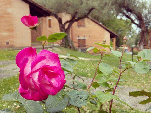 Campeggio Villaggio Cerquestra  - Camping Pérouse - Image N°7