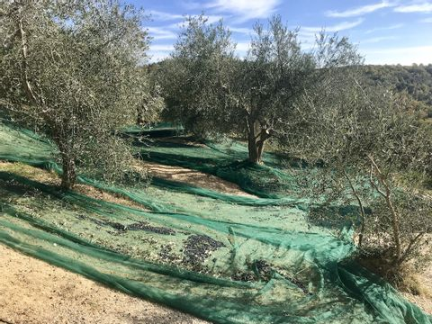 Camping The Lazy Olive Glamping - Camping Pise - Image N°13
