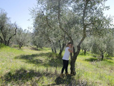 Camping The Lazy Olive Glamping - Camping Pise - Image N°11