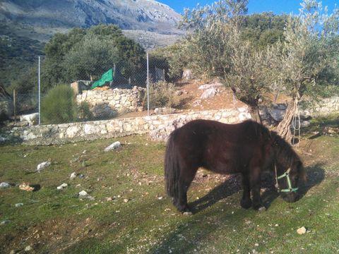 Camping El Cantonet - Camping Jaén - Image N°13