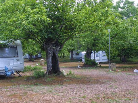 Camping Madronal - Camping Huelva - Image N°4
