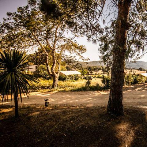 Camping Olva  - Camping Corse du sud