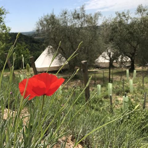 Camping The Lazy Olive Glamping - Camping Pisa